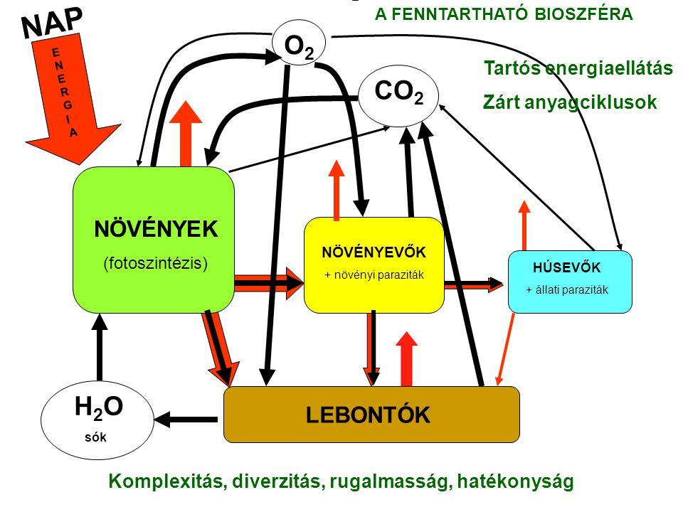 NAP NÖVÉNYEK (fotoszintézis) NÖVÉNYEVŐK + növényi paraziták HÚSEVŐK + állati paraziták LEBONTÓK H 2 O sók CO 2 O2O2 ENERGIAENERGIA Tartós energiaellátás Zárt anyagciklusok Komplexitás, diverzitás, rugalmasság, hatékonyság A FENNTARTHATÓ BIOSZFÉRA