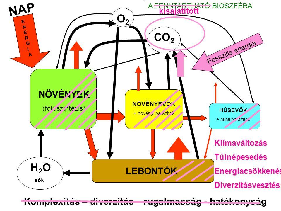 NAP NÖVÉNYEK (fotoszintézis) NÖVÉNYEVŐK + növényi paraziták HÚSEVŐK + állati paraziták LEBONTÓK H 2 O sók CO 2 O2O2 ENERGIAENERGIA Komplexitás – diverzitás – rugalmasság - hatékonyság A FENNTARTHATÓ BIOSZFÉRA Fosszilis energia KlímaváltozásTúlnépesedésEnergiacsökkenésDiverzitásvesztés kisajátított