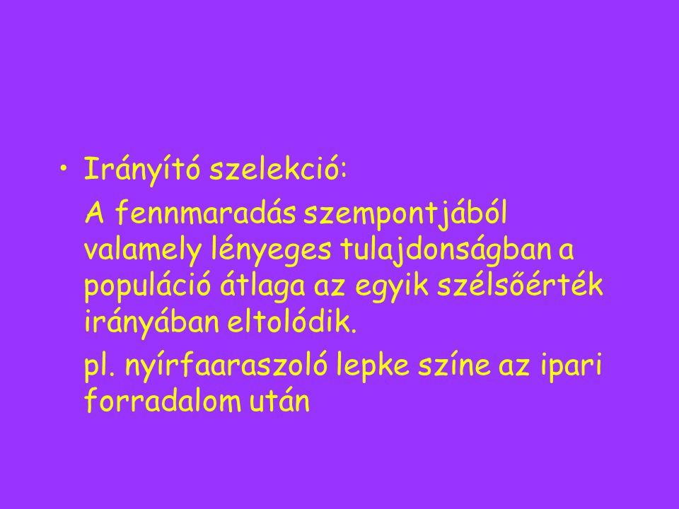 Irányító szelekció: A fennmaradás szempontjából valamely lényeges tulajdonságban a populáció átlaga az egyik szélsőérték irányában eltolódik. pl. nyír