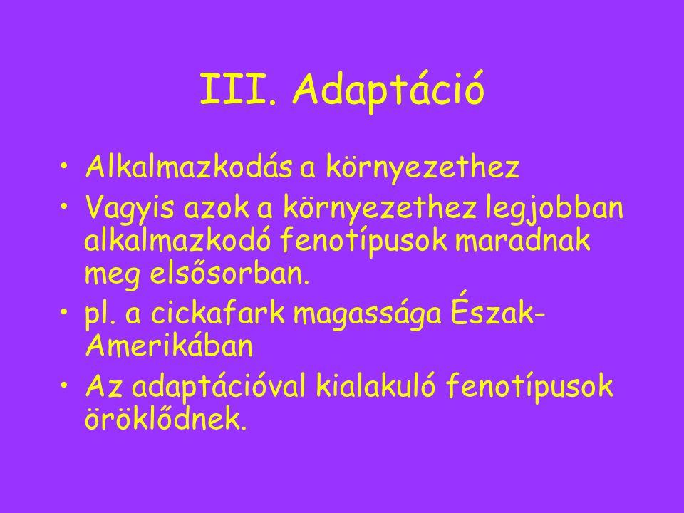 III. Adaptáció Alkalmazkodás a környezethez Vagyis azok a környezethez legjobban alkalmazkodó fenotípusok maradnak meg elsősorban. pl. a cickafark mag