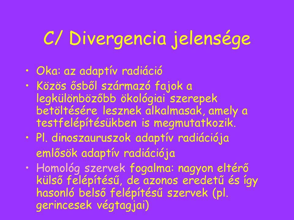 C/ Divergencia jelensége Oka: az adaptív radiáció Közös ősből származó fajok a legkülönbözőbb ökológiai szerepek betöltésére lesznek alkalmasak, amely