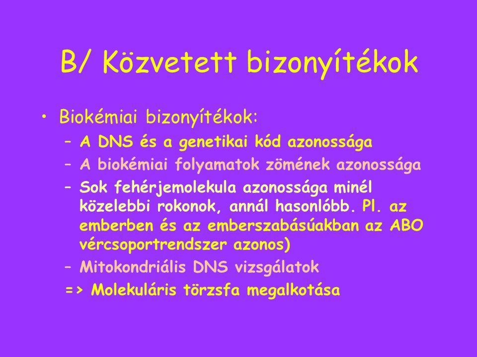 B/ Közvetett bizonyítékok Biokémiai bizonyítékok: –A DNS és a genetikai kód azonossága –A biokémiai folyamatok zömének azonossága –Sok fehérjemolekula