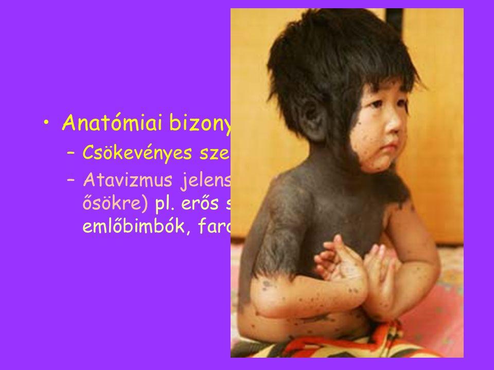 Anatómiai bizonyítékok –Csökevényes szervek –Atavizmus jelensége (= visszaütés az ősökre) pl. erős szőrzet, számfeletti emlőbimbók, farok, lyukas szív