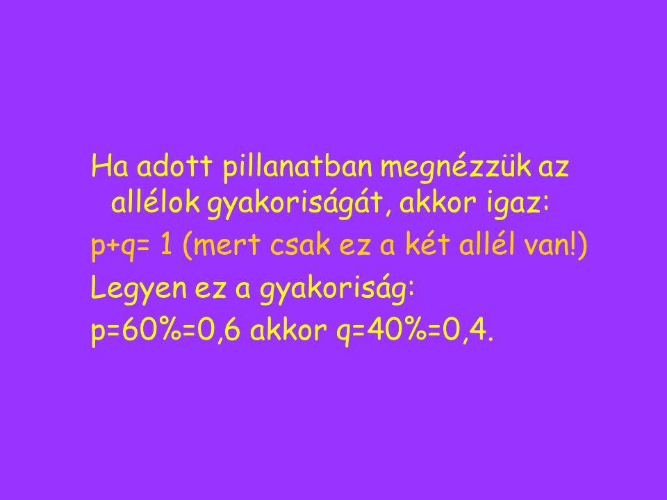 Ha adott pillanatban megnézzük az allélok gyakoriságát, akkor igaz: p+q= 1 (mert csak ez a két allél van!) Legyen ez a gyakoriság: p=60%=0,6 akkor q=4