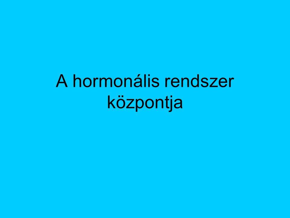 A hasnyálmirigy másik hormonja Glukagon Hatása ellentétes az inzulinéval Emeli a vércukorszintet