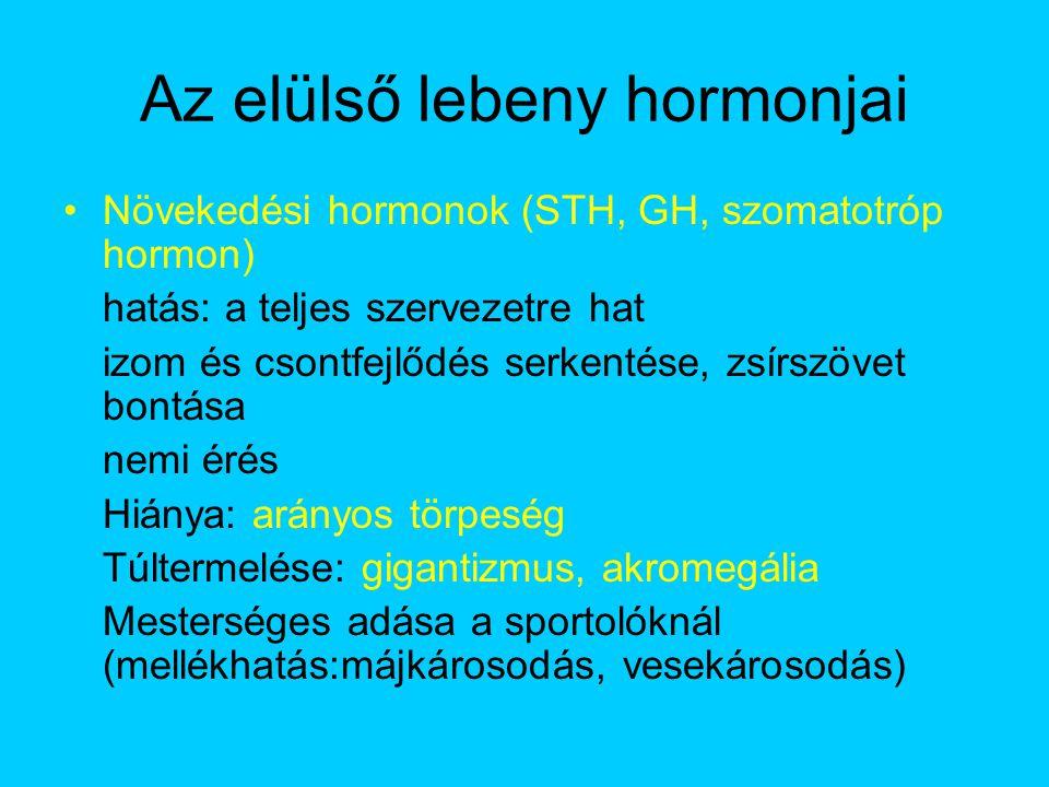Az elülső lebeny hormonjai Növekedési hormonok (STH, GH, szomatotróp hormon) hatás: a teljes szervezetre hat izom és csontfejlődés serkentése, zsírszö