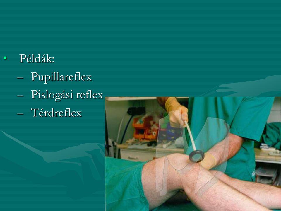 Példák: –P–P–P–Pupillareflex –P–P–P–Pislogási reflex –T–T–T–Térdreflex