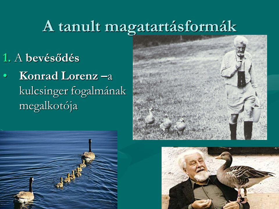 A tanult magatartásformák 1. A bevésődés Konrad Lorenz –a kulcsinger fogalmának megalkotójaKonrad Lorenz –a kulcsinger fogalmának megalkotója