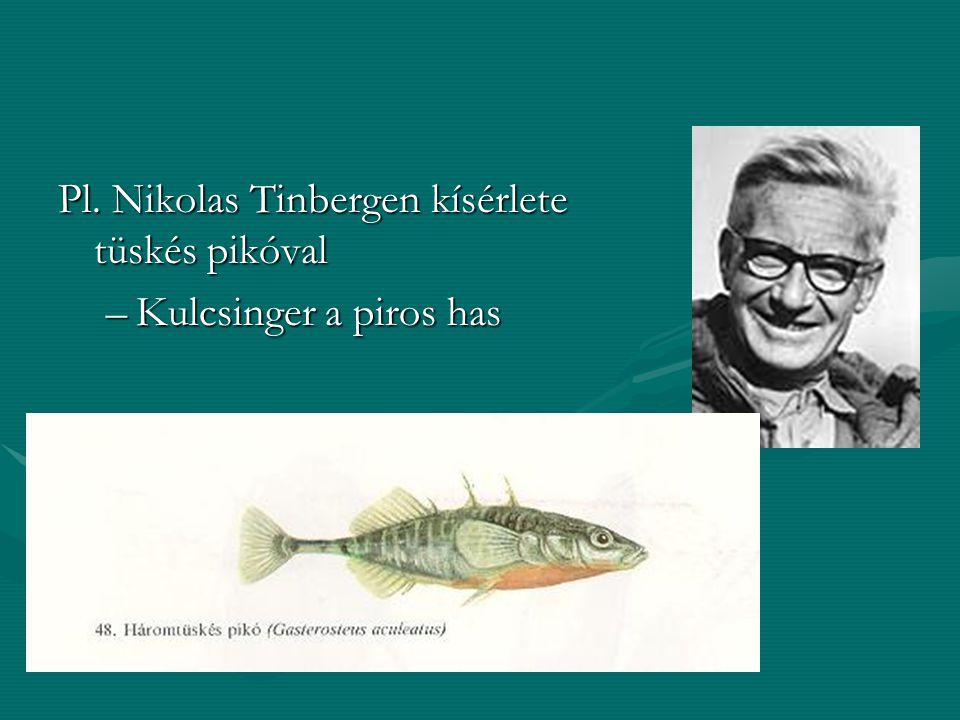 Pl. Nikolas Tinbergen kísérlete tüskés pikóval –Kulcsinger a piros has