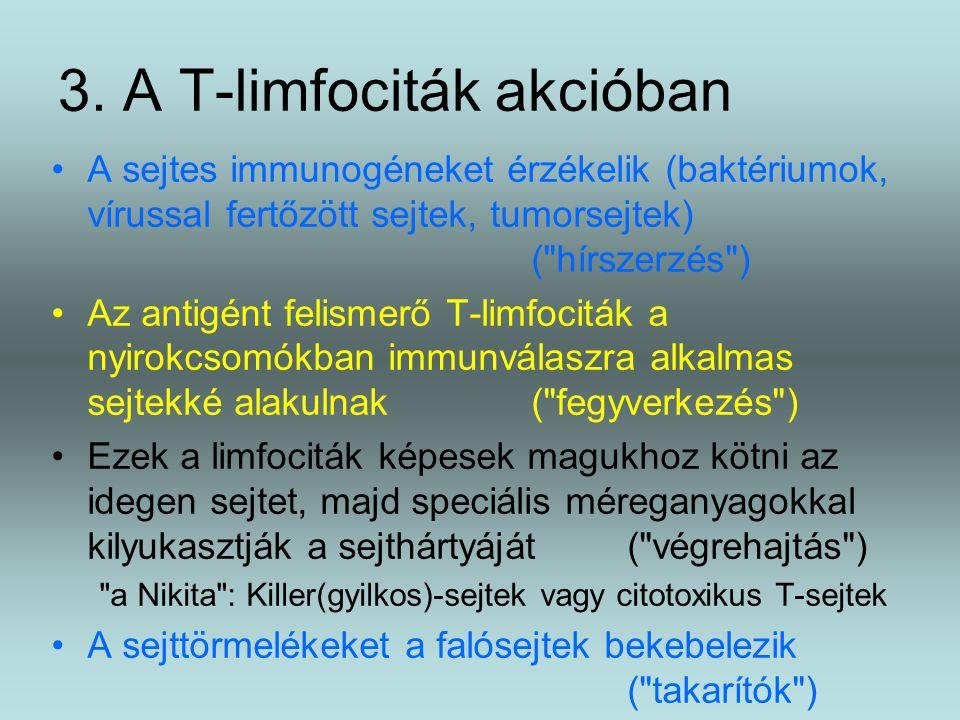 3. A T-limfociták akcióban A sejtes immunogéneket érzékelik (baktériumok, vírussal fertőzött sejtek, tumorsejtek) (