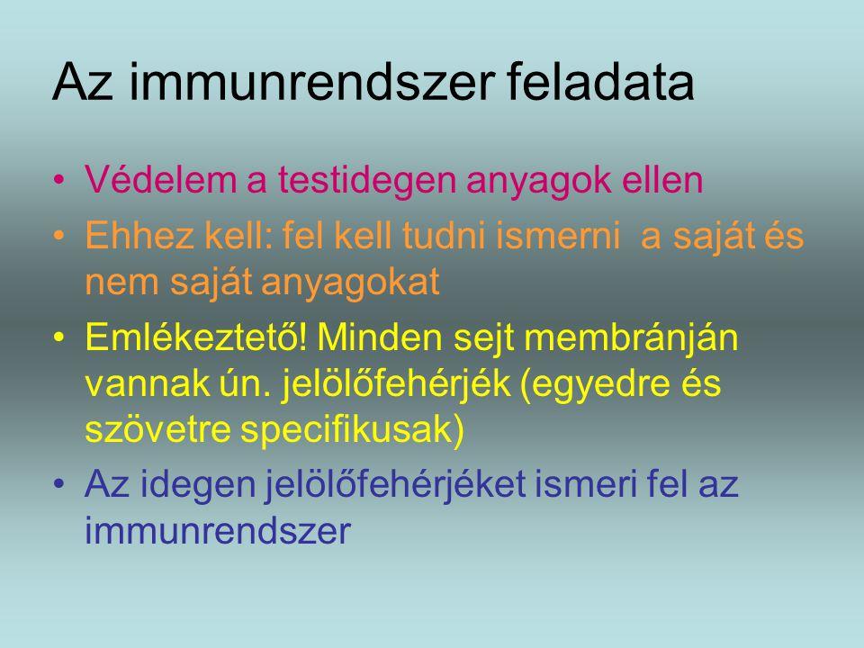 Az immunrendszer feladata Védelem a testidegen anyagok ellen Ehhez kell: fel kell tudni ismerni a saját és nem saját anyagokat Emlékeztető! Minden sej