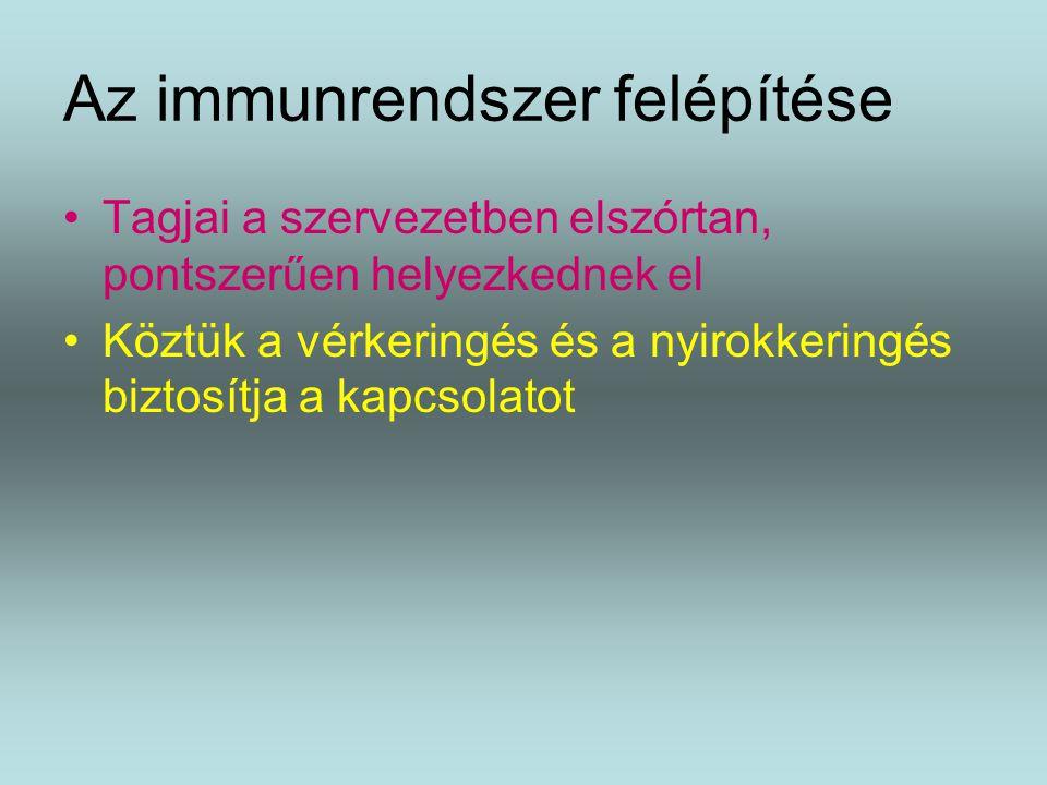 Az immunrendszer felépítése Tagjai a szervezetben elszórtan, pontszerűen helyezkednek el Köztük a vérkeringés és a nyirokkeringés biztosítja a kapcsolatot