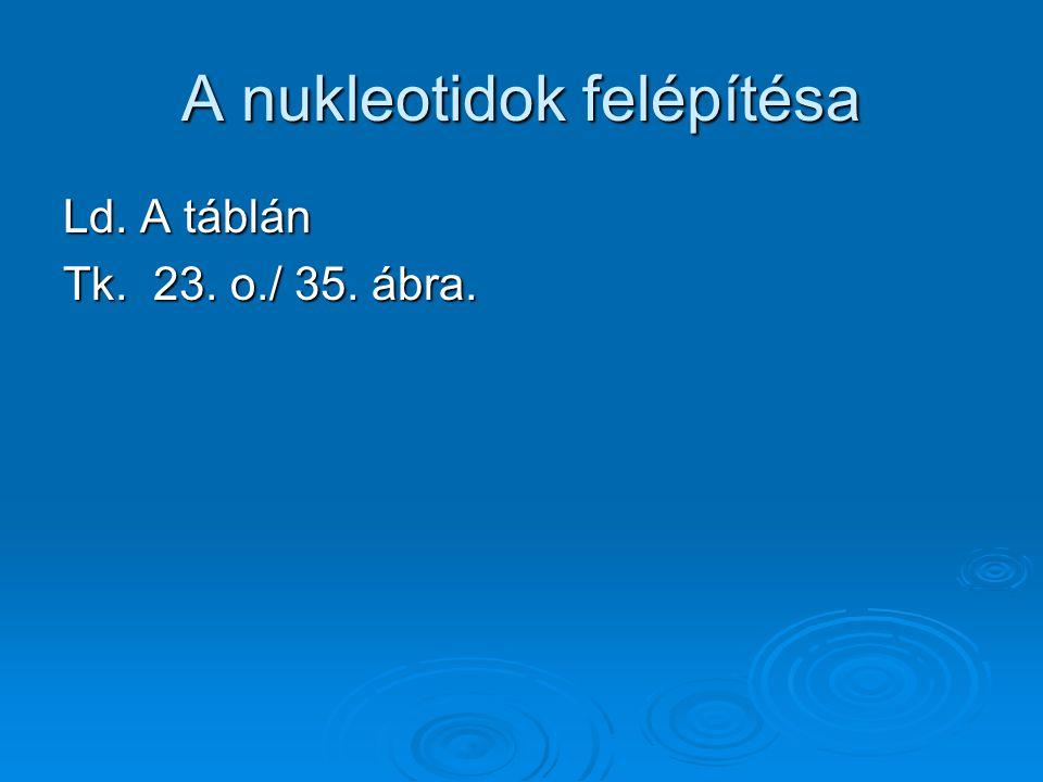 A nukleotidok felépítésa Ld. A táblán Tk. 23. o./ 35. ábra.