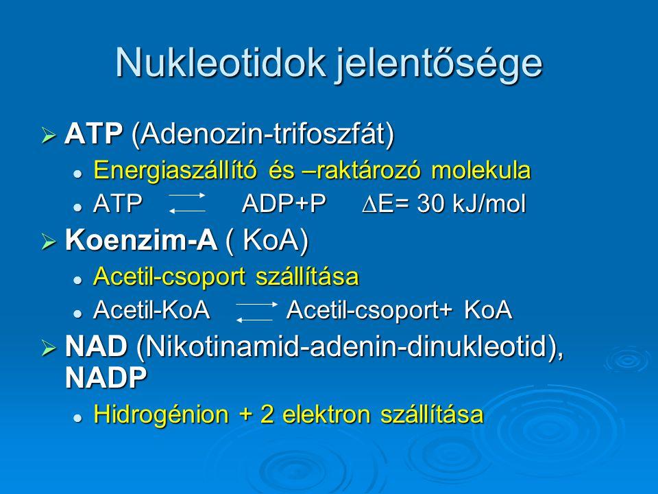 Nukleotidok jelentősége  ATP (Adenozin-trifoszfát) Energiaszállító és –raktározó molekula Energiaszállító és –raktározó molekula ATP ADP+P ∆E= 30 kJ/