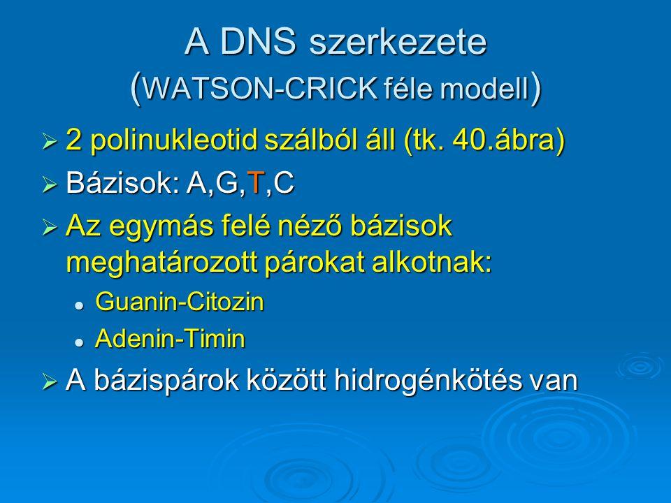 A DNS szerkezete ( WATSON-CRICK féle modell )  2 polinukleotid szálból áll (tk. 40.ábra)  Bázisok: A,G,T,C  Az egymás felé néző bázisok meghatározo
