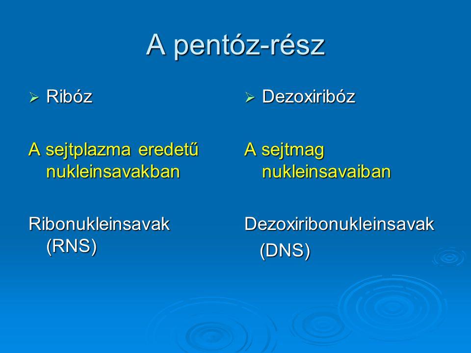 A pentóz-rész  Ribóz A sejtplazma eredetű nukleinsavakban Ribonukleinsavak (RNS)  Dezoxiribóz A sejtmag nukleinsavaiban Dezoxiribonukleinsavak (DNS)