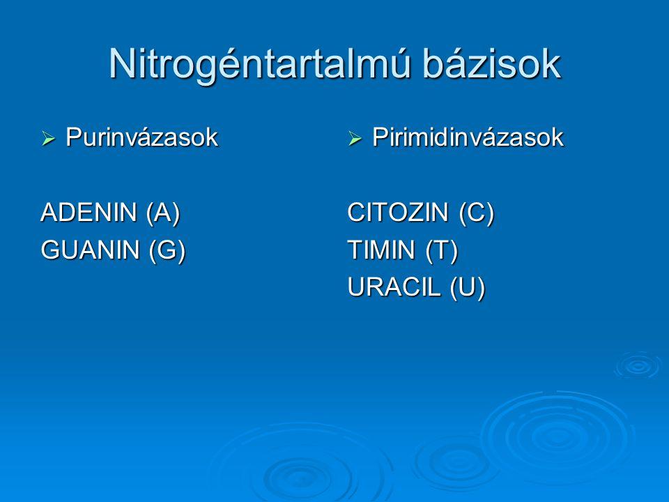 Nitrogéntartalmú bázisok  Purinbázisok ADENIN GUANIN