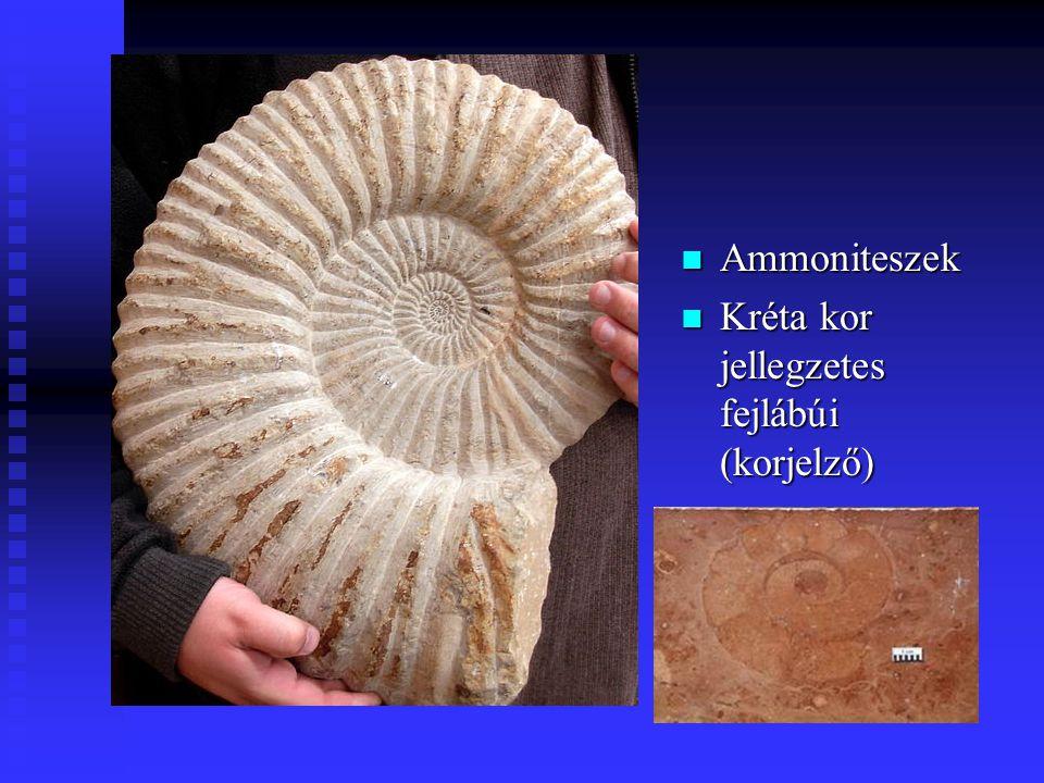 n Ammoniteszek n Kréta kor jellegzetes fejlábúi (korjelző)