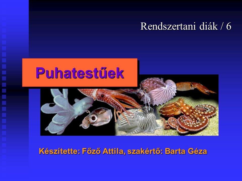 Rendszertani diák / 6 Készítette: Főző Attila, szakértő: Barta Géza PuhatestűekPuhatestűek