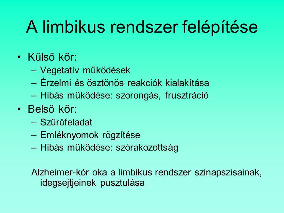 A limbikus rendszer felépítése Külső kör: –Vegetatív működések –Érzelmi és ösztönös reakciók kialakítása –Hibás működése: szorongás, frusztráció Belső