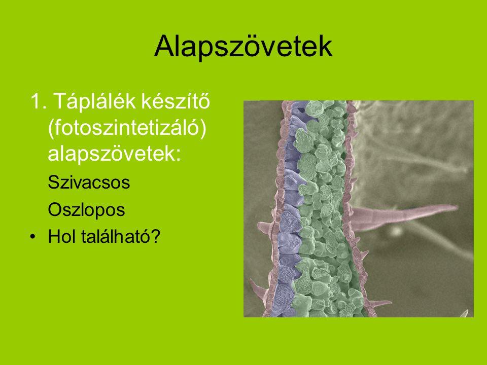 2.Szilárdító (mechanikai) alapszövetek Figyeld meg a sejtfalak vastagodását.