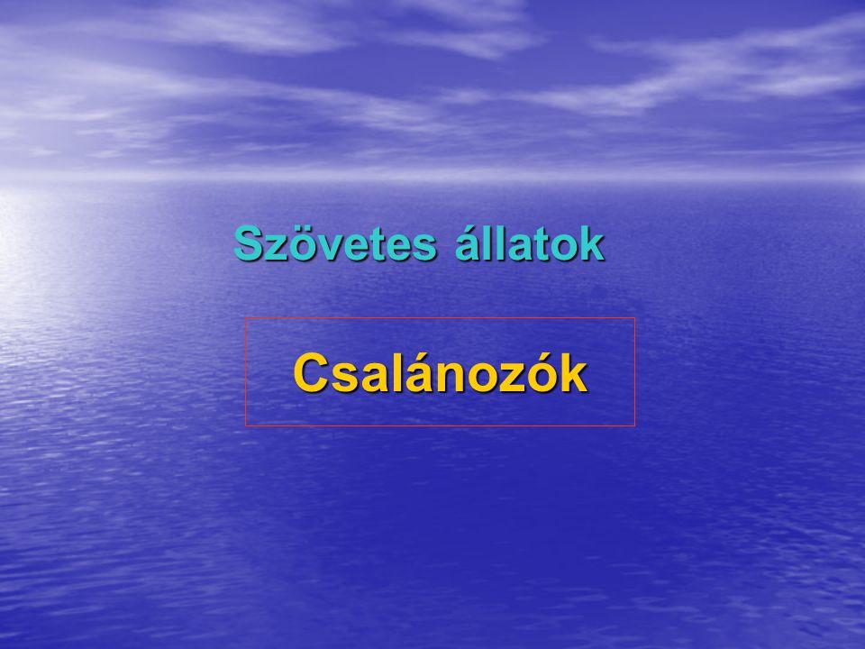 A Csalánozók általános jellemzése megjelenik a szövet megjelenik a szövet Ragadozó, többnyire tengeri állatok Ragadozó, többnyire tengeri állatok bélcsatorna nincs bélcsatorna nincs entoderma, űrbél, szájnyílás, ektoderma entoderma, űrbél, szájnyílás, ektoderma csalántok – méreganyag (védekezés, támadás) csalántok – méreganyag (védekezés, támadás) ált.