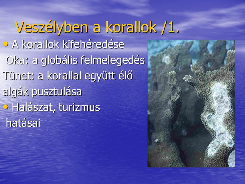 Veszélyben a korallok /1.