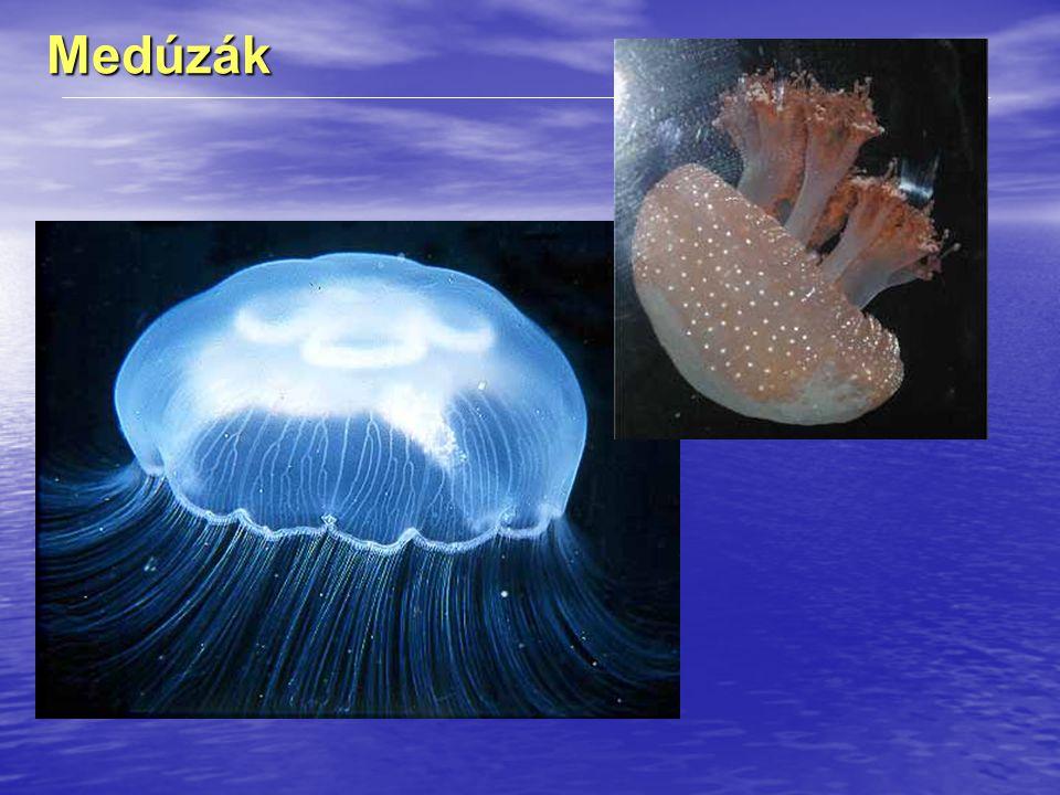 Medúzák