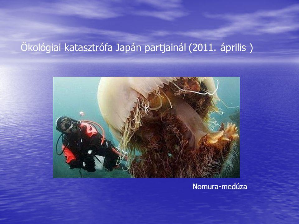 Ökológiai katasztrófa Japán partjainál (2011. április ) Nomura-medúza