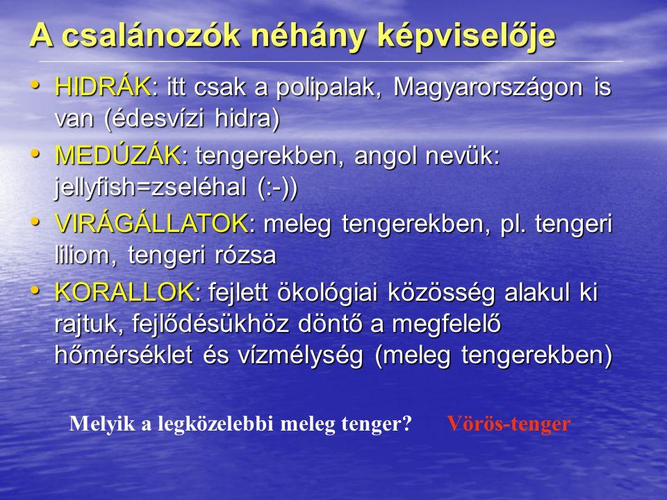 A csalánozók néhány képviselője HIDRÁK: itt csak a polipalak, Magyarországon is van (édesvízi hidra) HIDRÁK: itt csak a polipalak, Magyarországon is van (édesvízi hidra) MEDÚZÁK: tengerekben, angol nevük: jellyfish=zseléhal (:-)) MEDÚZÁK: tengerekben, angol nevük: jellyfish=zseléhal (:-)) VIRÁGÁLLATOK: meleg tengerekben, pl.