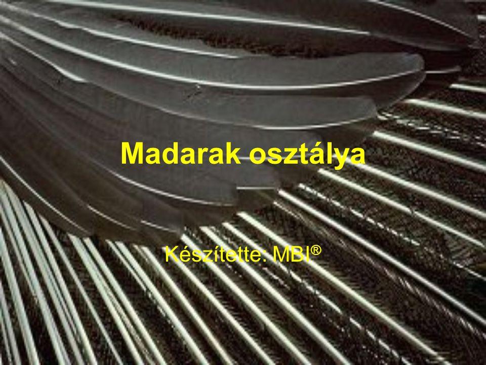 Jellemzés A hüllőkből alakultak ki Mellső végtag szárnnyá alakult Testfelületükön toll (szaruból): pehelytoll, evezőtoll, fedőtoll lábon szarupikkelyek Fogak helyett szarukáva (csőr) Repülő életmódhoz alkalmazkodtak
