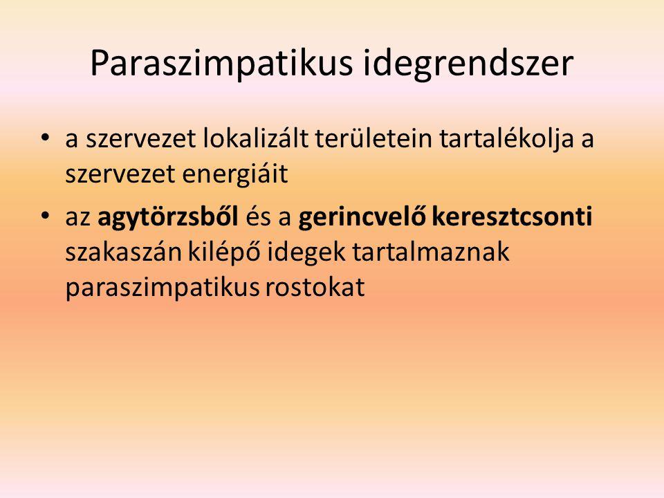 Paraszimpatikus idegrendszer a szervezet lokalizált területein tartalékolja a szervezet energiáit az agytörzsből és a gerincvelő keresztcsonti szakaszán kilépő idegek tartalmaznak paraszimpatikus rostokat