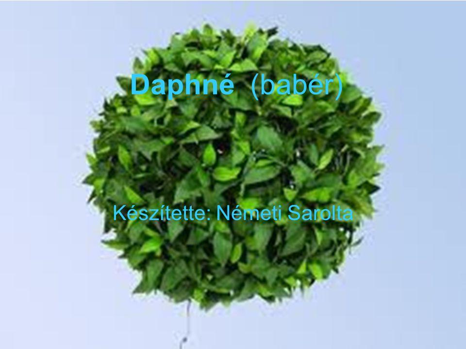 Daphné (babér) Készítette: Németi Sarolta