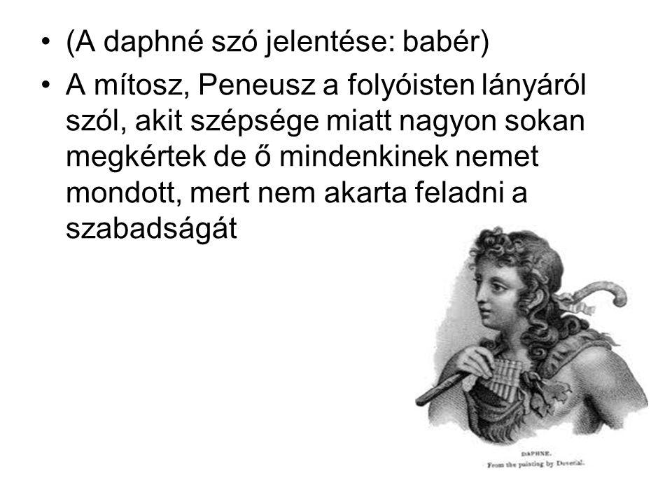 (A daphné szó jelentése: babér) A mítosz, Peneusz a folyóisten lányáról szól, akit szépsége miatt nagyon sokan megkértek de ő mindenkinek nemet mondot