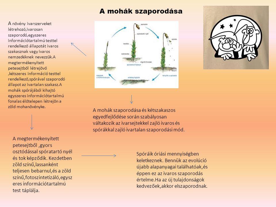 A mohák szaporodása A mohák szaporodása és kétszakaszos egyedfejlődése során szabályosan váltakozik az ivarsejtekkel zajló ivaros és spórákkal zajló i