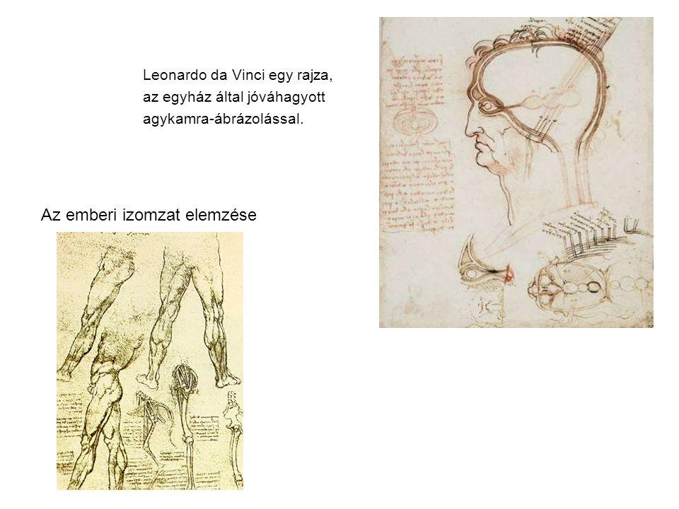 Leonardo da Vinci egy rajza, az egyház által jóváhagyott agykamra-ábrázolással. Az emberi izomzat elemzése
