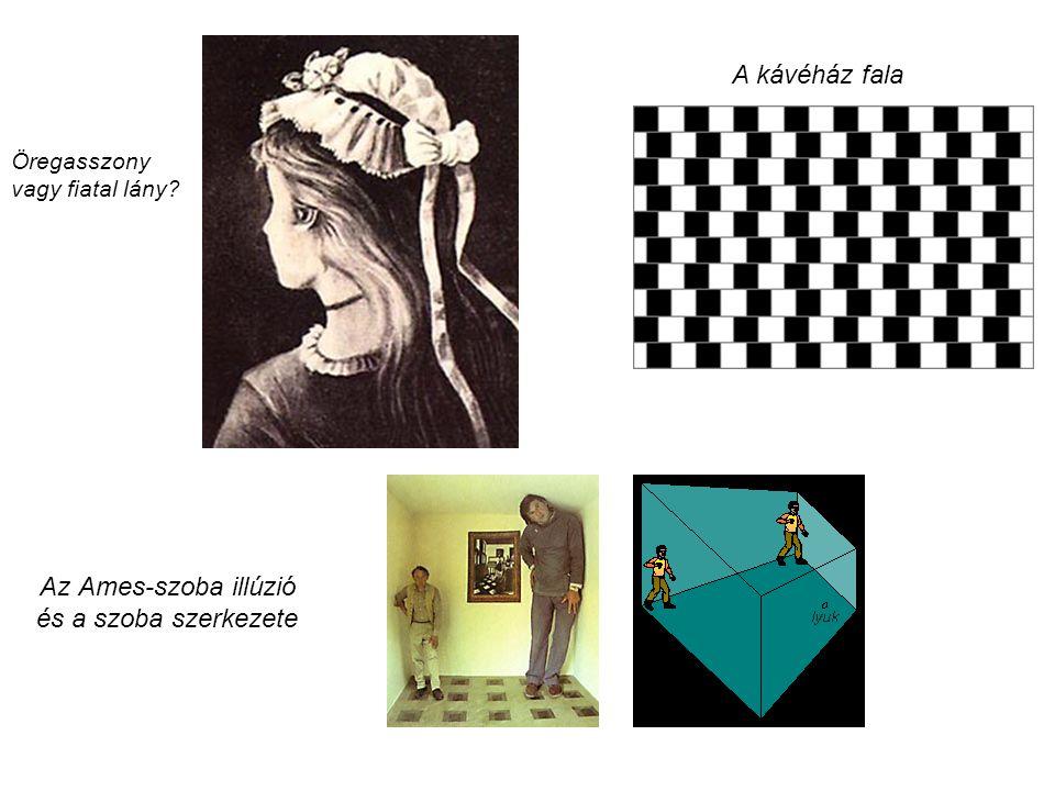 Az Ames-szoba illúzió és a szoba szerkezete Öregasszony vagy fiatal lány? A kávéház fala
