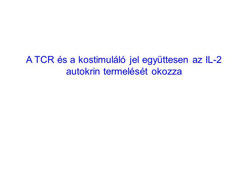 A TCR és a kostimuláló jel együttesen az IL-2 autokrin termelését okozza