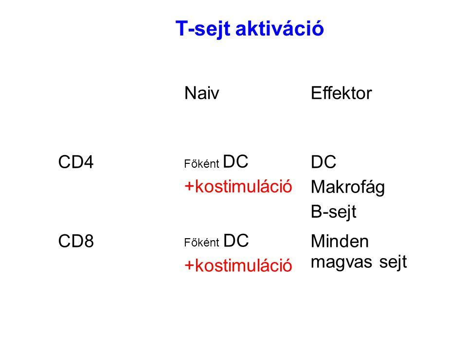 NaivEffektor CD4 Főként DC +kostimuláció DC Makrofág B-sejt CD8 Főként DC +kostimuláció Minden magvas sejt T-sejt aktiváció