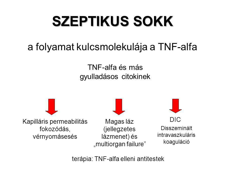 SZEPTIKUS SOKK a folyamat kulcsmolekulája a TNF-alfa TNF-alfa és más gyulladásos citokinek Kapilláris permeabilitás fokozódás, vérnyomásesés DIC Magas