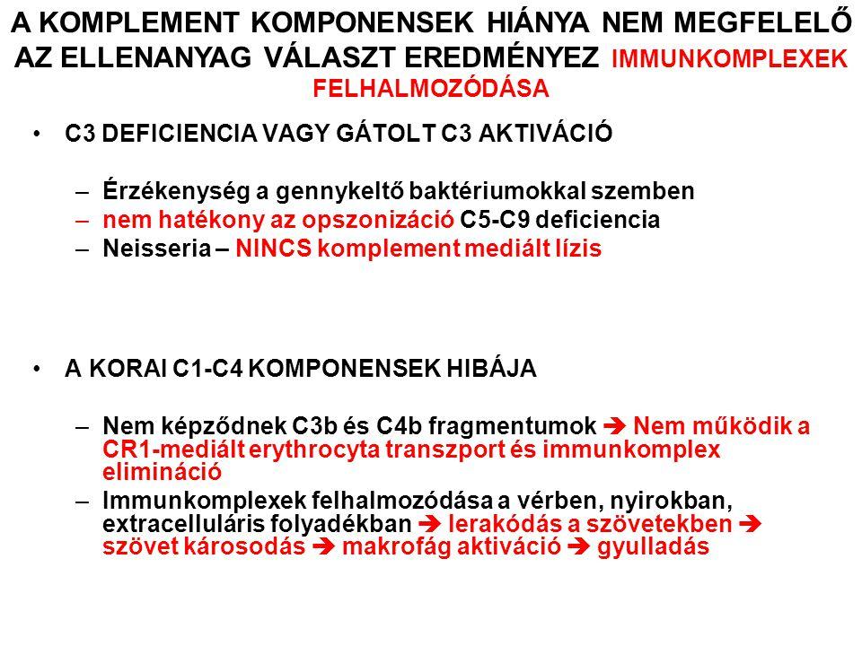 C3 DEFICIENCIA VAGY GÁTOLT C3 AKTIVÁCIÓ –Érzékenység a gennykeltő baktériumokkal szemben –nem hatékony az opszonizáció C5-C9 deficiencia –Neisseria – NINCS komplement mediált lízis A KORAI C1-C4 KOMPONENSEK HIBÁJA –Nem képződnek C3b és C4b fragmentumok  Nem működik a CR1-mediált erythrocyta transzport és immunkomplex elimináció –Immunkomplexek felhalmozódása a vérben, nyirokban, extracelluláris folyadékban  lerakódás a szövetekben  szövet károsodás  makrofág aktiváció  gyulladás A KOMPLEMENT KOMPONENSEK HIÁNYA NEM MEGFELELŐ AZ ELLENANYAG VÁLASZT EREDMÉNYEZ IMMUNKOMPLEXEK FELHALMOZÓDÁSA
