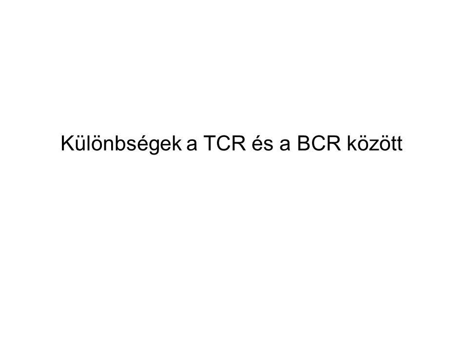 Különbségek a TCR és a BCR között