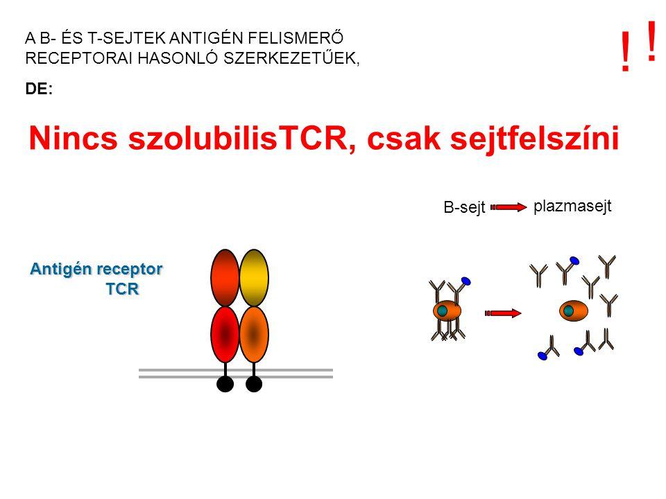 Nincs szolubilisTCR, csak sejtfelszíni Antigén receptor TCR ! ! B-sejt plazmasejt A B- ÉS T-SEJTEK ANTIGÉN FELISMERŐ RECEPTORAI HASONLÓ SZERKEZETŰEK,