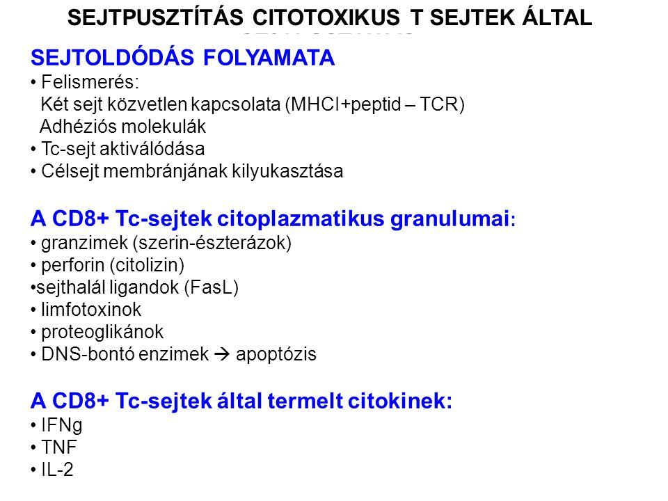SEJTOLDÓDÁS FOLYAMATA Felismerés: Két sejt közvetlen kapcsolata (MHCI+peptid – TCR) Adhéziós molekulák Tc-sejt aktiválódása Célsejt membránjának kilyukasztása A CD8+ Tc-sejtek citoplazmatikus granulumai : granzimek (szerin-észterázok) perforin (citolizin) sejthalál ligandok (FasL) limfotoxinok proteoglikánok DNS-bontó enzimek  apoptózis A CD8+ Tc-sejtek által termelt citokinek: IFNg TNF IL-2 SEJTPUSZTÍTÁS SEJTPUSZTÍTÁS CITOTOXIKUS T SEJTEK ÁLTAL