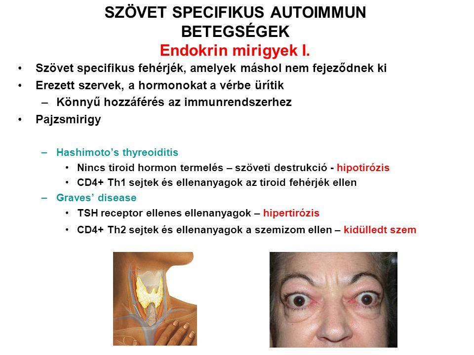SZÖVET SPECIFIKUS AUTOIMMUN BETEGSÉGEK Endokrin mirigyek I. Szövet specifikus fehérjék, amelyek máshol nem fejeződnek ki Erezett szervek, a hormonokat