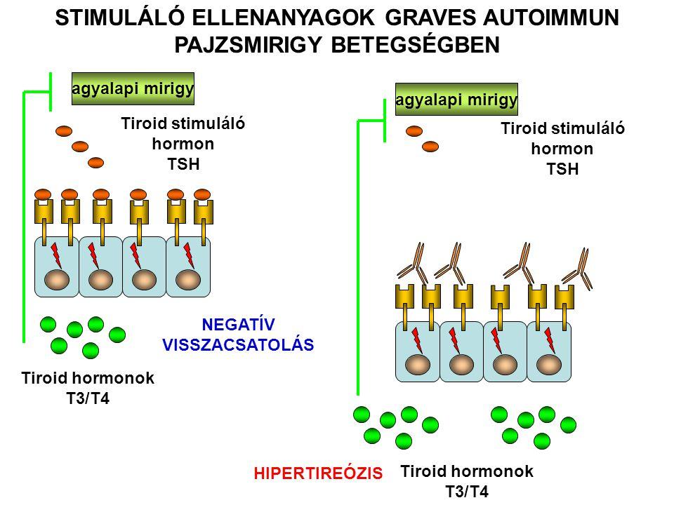 agyalapi mirigy Tiroid stimuláló hormon TSH Tiroid hormonok T3/T4 HIPERTIREÓZIS STIMULÁLÓ ELLENANYAGOK GRAVES AUTOIMMUN PAJZSMIRIGY BETEGSÉGBEN Tiroid