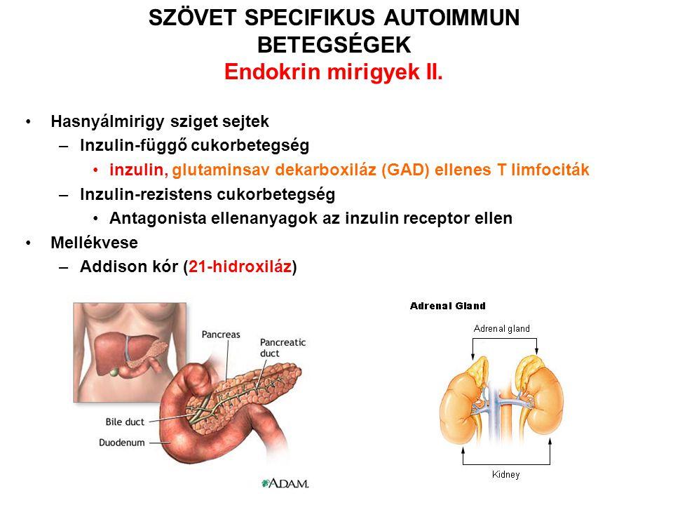 A SEJTFELSZÍNI RECEPTOROK ELLEN IRÁNYULÓ ELLENANYAGOK ÁLTAL KIVÁLTOTT KÓRKÉPEK II típusú hiperszenzitivitás SzindrómaAntigénEllenanyagKövetkezmény Graves betegségTireoid stimuláló hormon receptor AgonistaHipertireózis Myasthenia gravisAcetilkolin receptor AntagonistaProgresszív izom gyengeség Inzulin rezisztens diabetes Inzulin receptorAntagonistaHiperglycemia, ketoacidósis HipoglycemiaInzulin receptorAgonistaHipoglycemia