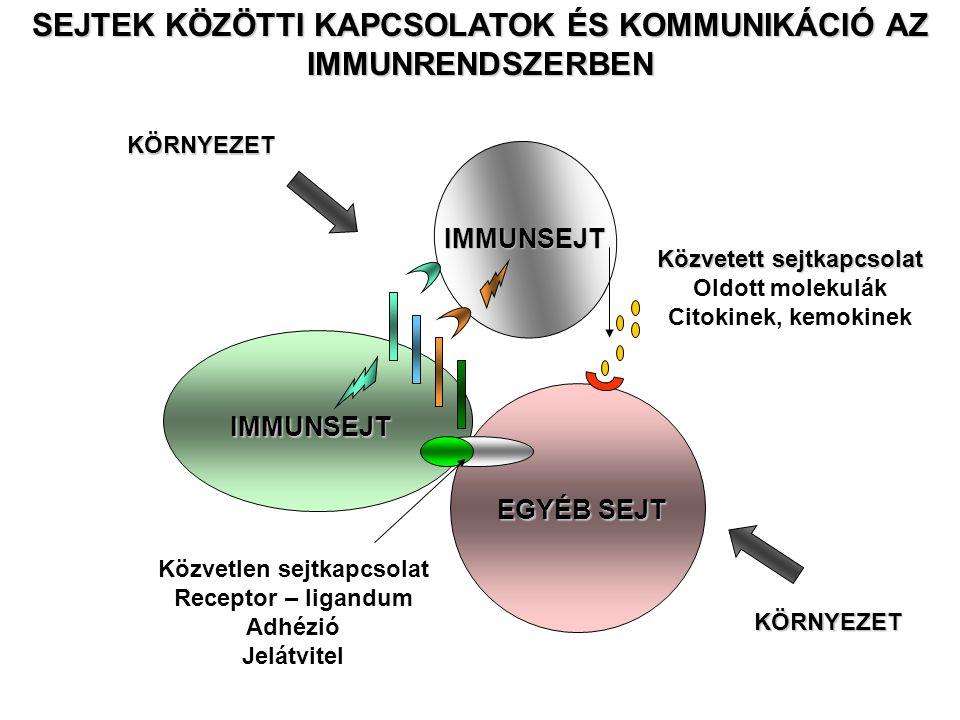 IMMUNSEJT EGYÉB SEJT IMMUNSEJT Közvetlen sejtkapcsolat Receptor – ligandum Adhézió Jelátvitel Közvetett sejtkapcsolat Oldott molekulák Citokinek, kemokinek SEJTEK KÖZÖTTI KAPCSOLATOK ÉS KOMMUNIKÁCIÓ AZ IMMUNRENDSZERBEN KÖRNYEZETKÖRNYEZET