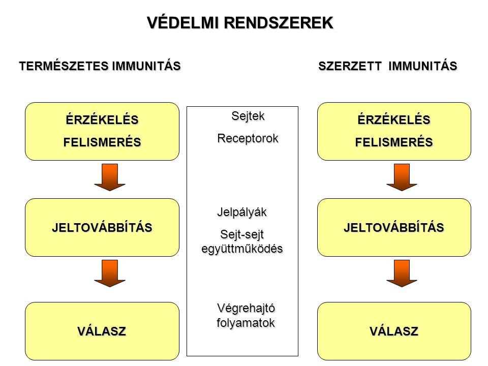 ÉRZÉKELÉSFELISMERÉS JELTOVÁBBÍTÁS VÁLASZ TERMÉSZETES IMMUNITÁS SejtekReceptorokJelpályák Sejt-sejt együttműködés Végrehajtó folyamatok VÉDELMI RENDSZEREK ÉRZÉKELÉSFELISMERÉS JELTOVÁBBÍTÁS VÁLASZ SZERZETT IMMUNITÁS