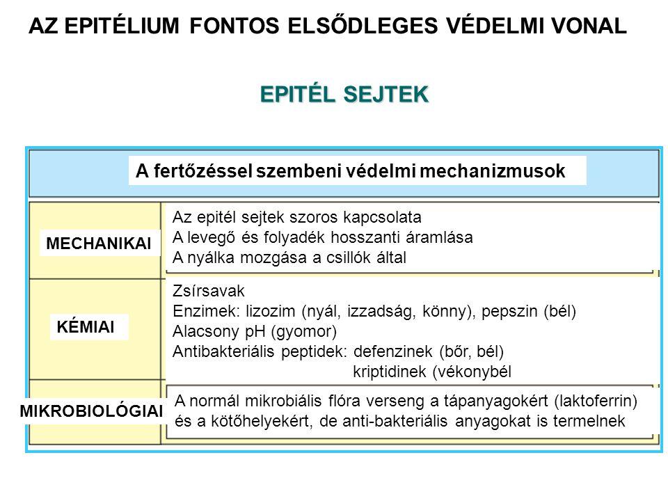 AZ EPITÉLIUM FONTOS ELSŐDLEGES VÉDELMI VONAL A fertőzéssel szembeni védelmi mechanizmusok MECHANIKAI KÉMIAI MIKROBIOLÓGIAI Az epitél sejtek szoros kapcsolata A levegő és folyadék hosszanti áramlása A nyálka mozgása a csillók által Zsírsavak Enzimek: lizozim (nyál, izzadság, könny), pepszin (bél) Alacsony pH (gyomor) Antibakteriális peptidek: defenzinek (bőr, bél) kriptidinek (vékonybél A normál mikrobiális flóra verseng a tápanyagokért (laktoferrin) és a kötőhelyekért, de anti-bakteriális anyagokat is termelnek EPITÉL SEJTEK